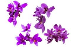Собрание отрезка орхидеи фиолетовой стоковые фотографии rf