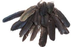 Собрание пер птиц в тенях серого цвета Стоковая Фотография
