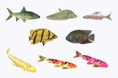 Собрание пресноводной рыбы Стоковая Фотография RF