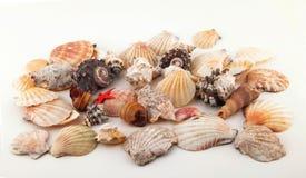 собрание предпосылки изолированное над белизной seashell Стоковое Изображение RF