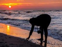 собрание предпосылки изолированное над белизной seashell Стоковое Фото