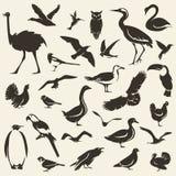 Собрание птиц большое, стилизованные силуэты вектора иллюстрация вектора