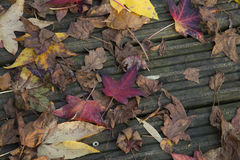Собрание разбросанных листьев осени Стоковые Изображения RF