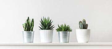 Собрание различного кактуса и суккулентных заводов в различных баках В горшке заводы дома кактуса на белой полке стоковое изображение rf