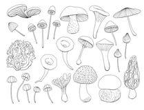 Собрание различных грибов бесплатная иллюстрация