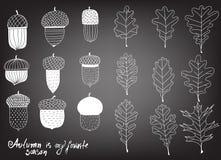 Собрание различных жолудей и листьев бесплатная иллюстрация