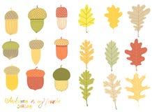 Собрание различных жолудей и листьев иллюстрация штока