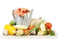 Собрание различных изолированных овощей Стоковое Фото