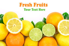 Собрание различных цитрусовых фруктов с добавляет Стоковая Фотография RF