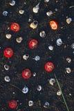 Собрание раковины Стоковая Фотография RF