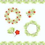 Собрание рамки вектора флористическое Стоковое Фото