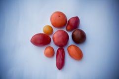 Собрание редких томатов на белизне Стоковая Фотография