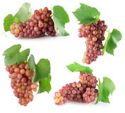 Собрание розовых виноградин изолированных на белой предпосылке Стоковая Фотография RF