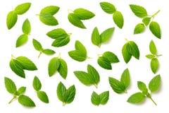 Собрание свежих листьев пипермента изолированных на белизне, взгляд сверху Стоковая Фотография RF