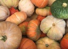 Собрание сезонных тыкв, тыкв и предпосылки сквоша Стоковая Фотография RF