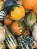 Собрание сезонных тыкв падения, тыкв и предпосылки сквоша Стоковое Фото