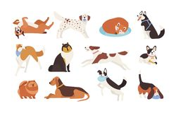 Собрание смешных собак различных пород играя, спящ, лежать, сидя Комплект милого и забавного любимчика шаржа Стоковые Изображения