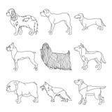 Собрание собаки пород в линии Стоковое Изображение