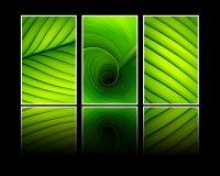 Собрание текстуры знамен зеленых листьев Стоковые Фотографии RF