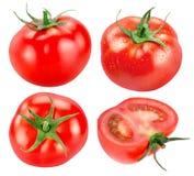 Собрание томатов изолированных на белой предпосылке Стоковые Фотографии RF