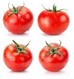 Собрание томатов изолированных на белой предпосылке Стоковая Фотография RF