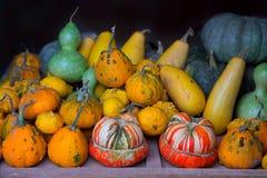 Собрание тыквы осени как предпосылка хеллоуина Стоковые Изображения RF