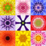 Собрание установило калейдоскоп 9 цветов мандал цветка различный Стоковое фото RF