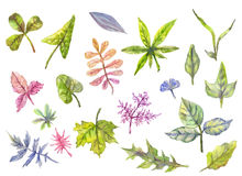 Собрание флористических элементов, листьев в акварели Wedding, Стоковое фото RF