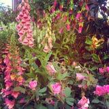 Собрание цветка Стоковая Фотография