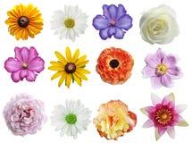 Собрание цветков Стоковые Фотографии RF
