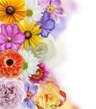 Собрание цветков Стоковые Фото