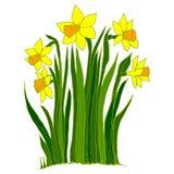 Собрание цветков narcissus Стоковые Фото