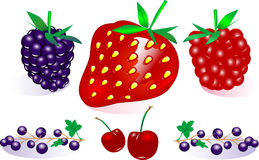 Собрание ягоды вектора Стоковые Фото