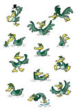 собрание ducks потеха Стоковые Фото