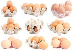 собрание eggs комплекты стоковые фотографии rf