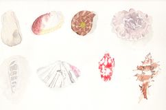 Собрание Seashell в акварели Стоковое Изображение RF