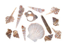 Собрание seashells Стоковое Изображение RF