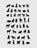 Собрание Silgouettes собаки Стоковое фото RF