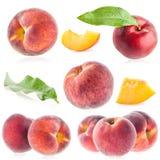 Собрания зрелого персика Стоковые Изображения