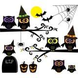 Собрания сычей хеллоуина Счастливые элементы хеллоуина Стоковые Изображения