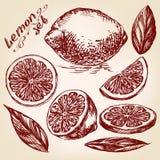 Собрания эскиза вектора лимонов нарисованного рукой Стоковое Изображение RF