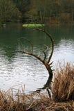 Собственное искусство природы Стоковое фото RF