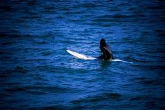 совершенная волна Стоковая Фотография