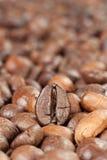 Совершенная фасоль coffe стоковые изображения