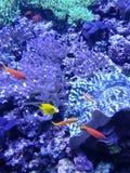 Совершенное изображение подводной твари стоковое фото