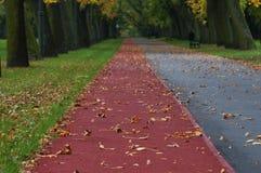 Совершенное место для jog Стоковое Фото