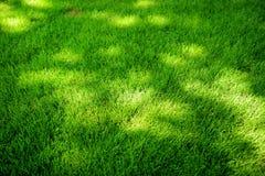 Совершенно накошенная свежая лужайка сада в лете Зеленая трава с пятнами на Солнце стоковое фото