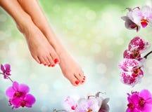 Совершенные женские ноги Стоковое Изображение
