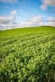 Совершенные зеленая и голубой Стоковые Изображения