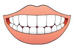 совершенные зубы Стоковые Фото